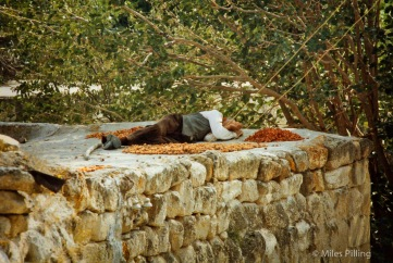 Elderly man asleep on a roof next to drying fruit and chillies, Turkey, 1992