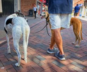 dog-legs